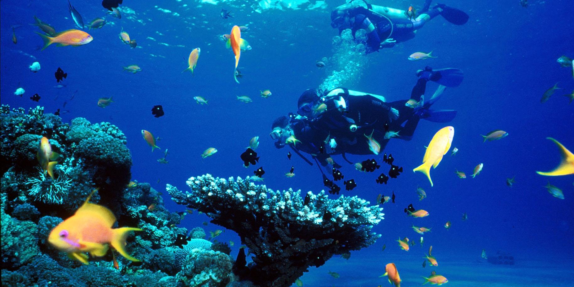 Mergulhar, uma experiência incrível! - Portal de Esporte e Saúde